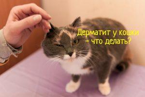 Дерматит у кошки - что делать