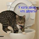 У кота часто запоры – что делать?