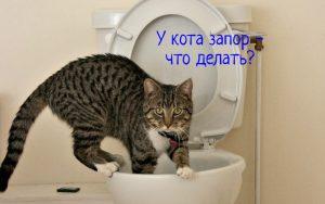 Запор у кота что делать