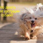 Кастрация собаки – что делать после процедуры?