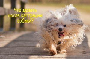 Что делать после кастрации собаки