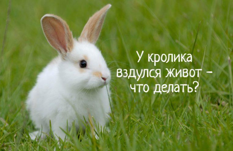 У кролика вздулся живот – что делать?