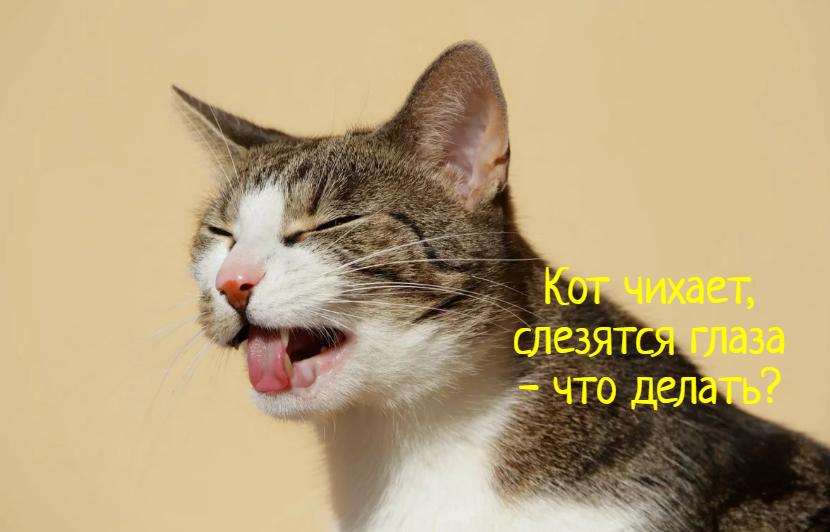 Кот чихает и слезятся глаза – что делать?