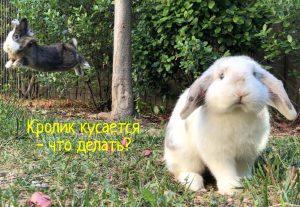 Кролик кусается что делать