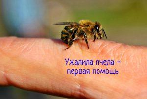Ужалила пчела первая помощь
