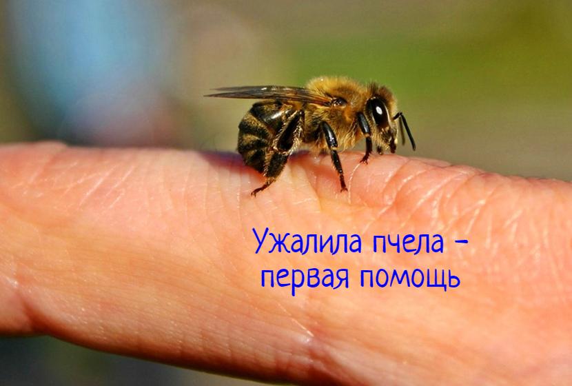 Аллергия на укусы пчел – первая помощь, что делать?