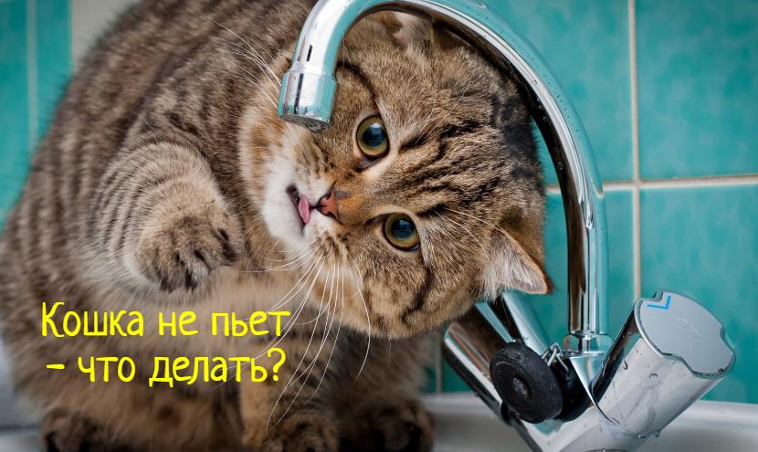 Кошка не пьет воду – что делать?