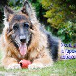 Уход за старой собакой – что делать?