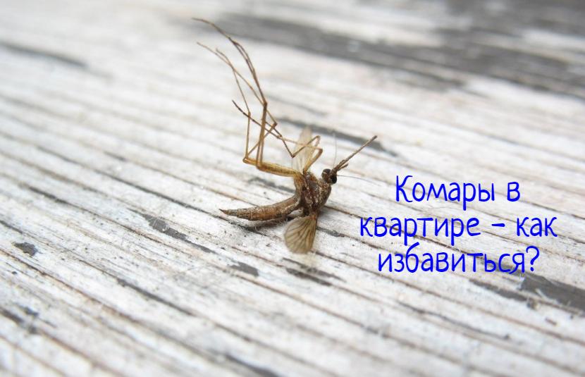 Комары в квартире – что делать?