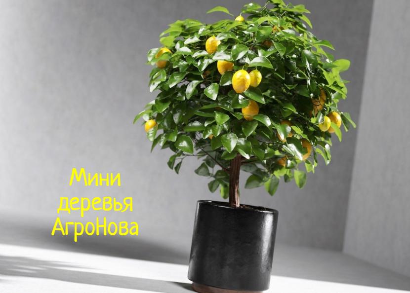 АгроНова – что делать, если хочется спелых фруктов