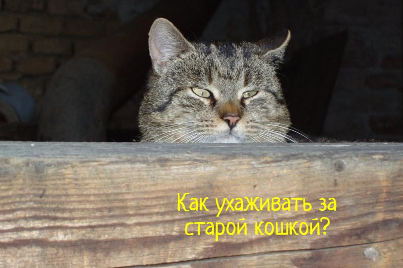 Что делать, как ухаживать за стареющей кошкой?