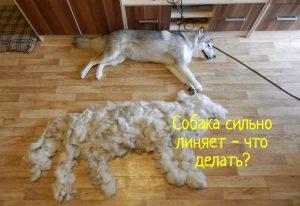 Собака линяет что делать