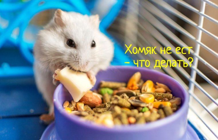 Хомяк не ест корм – что делать?