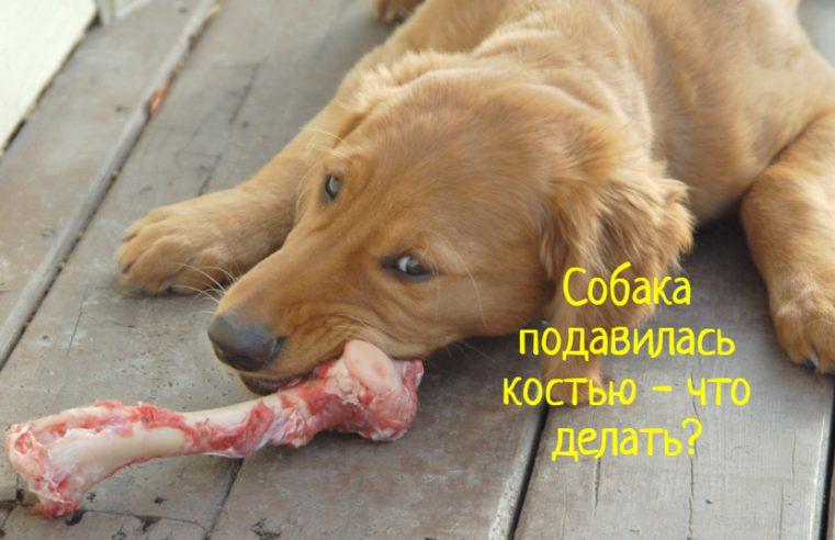 Что делать, если собака подавилась костью?