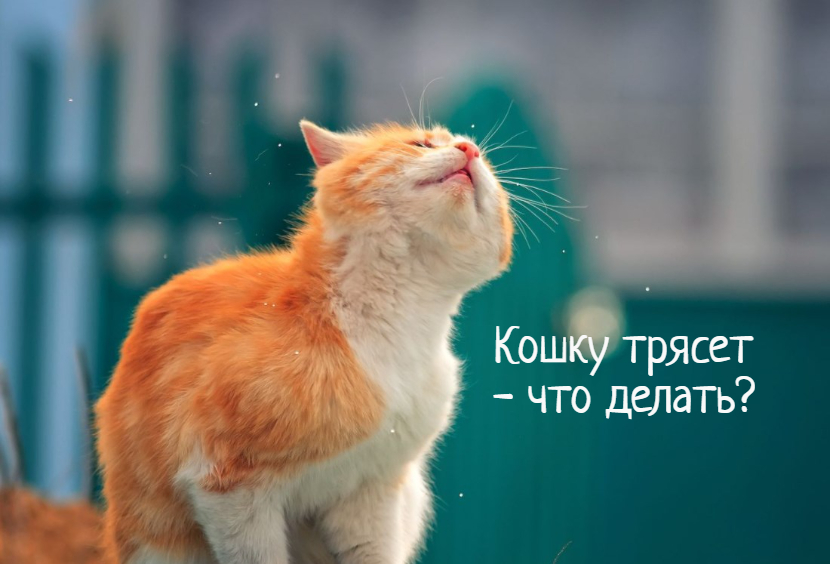 Кошку трясет – причины, что делать?