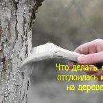 Отслоилась кора на дереве - что делать?