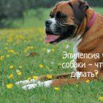 Эпилепсия у собаки - что делать?