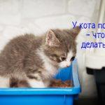 Что делать, если у кота понос?