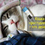 Что делать, если кошка простудилась - причины и симптомы