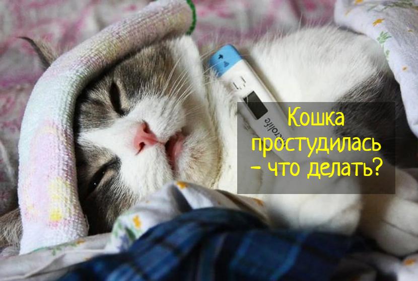 Что делать, если кошка простудилась — причины и симптомы