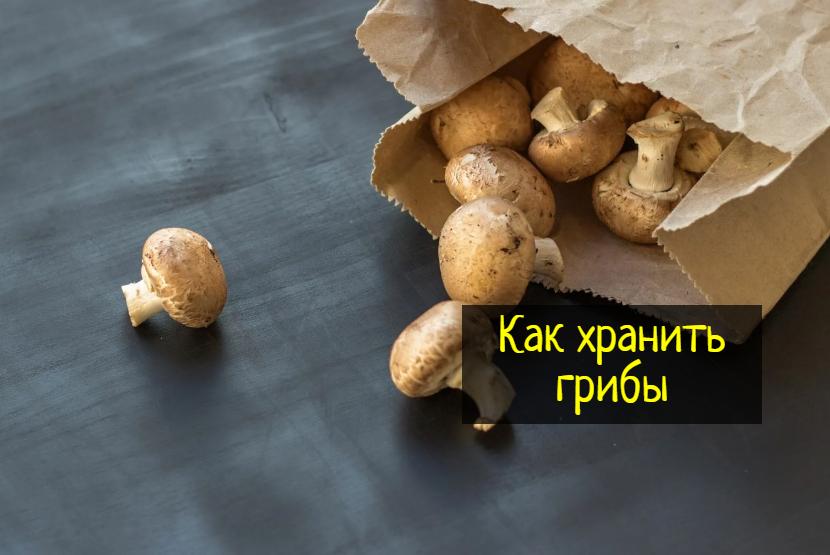 Как сохранить грибы свежими — что делать?