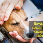 Домашние средства от кашля для собаки - что делать?