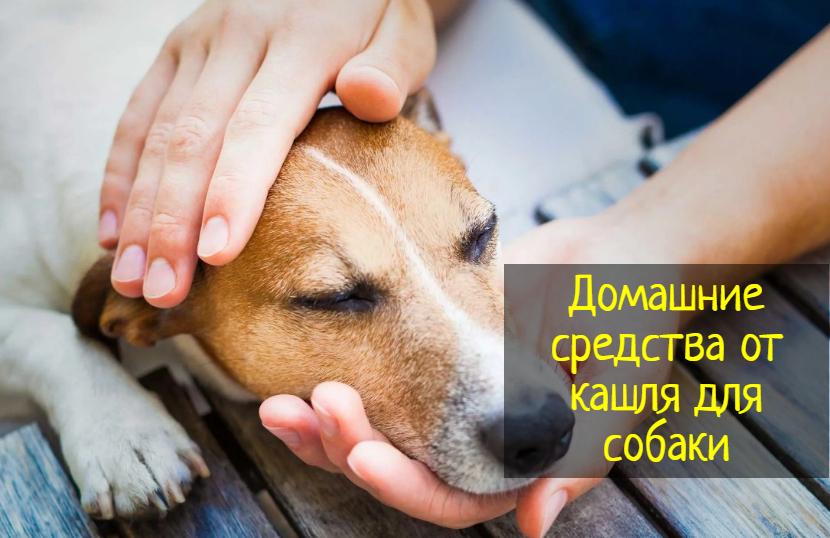 Домашние средства от кашля для собаки — что делать?