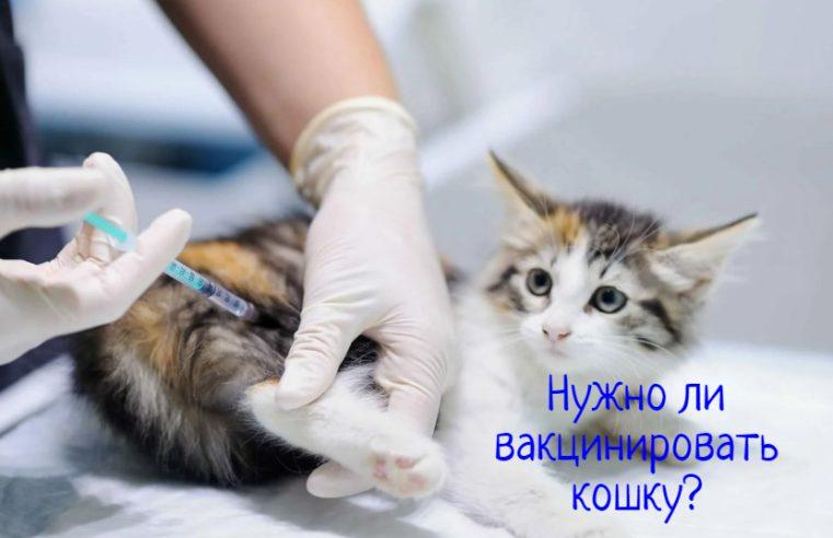 Когда следует вакцинировать кошку?